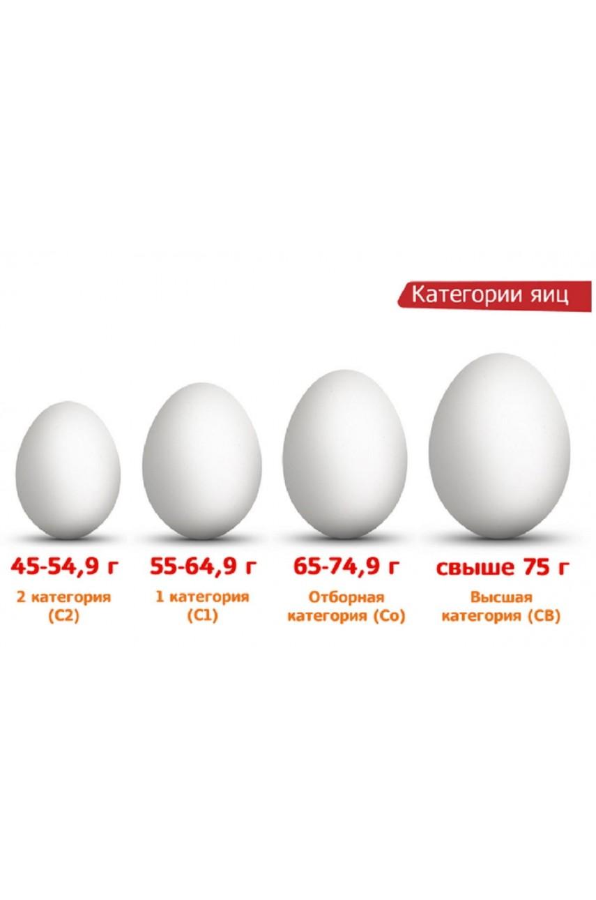 Яйца куриные ГИГАНТ категории СВ к вашему столу